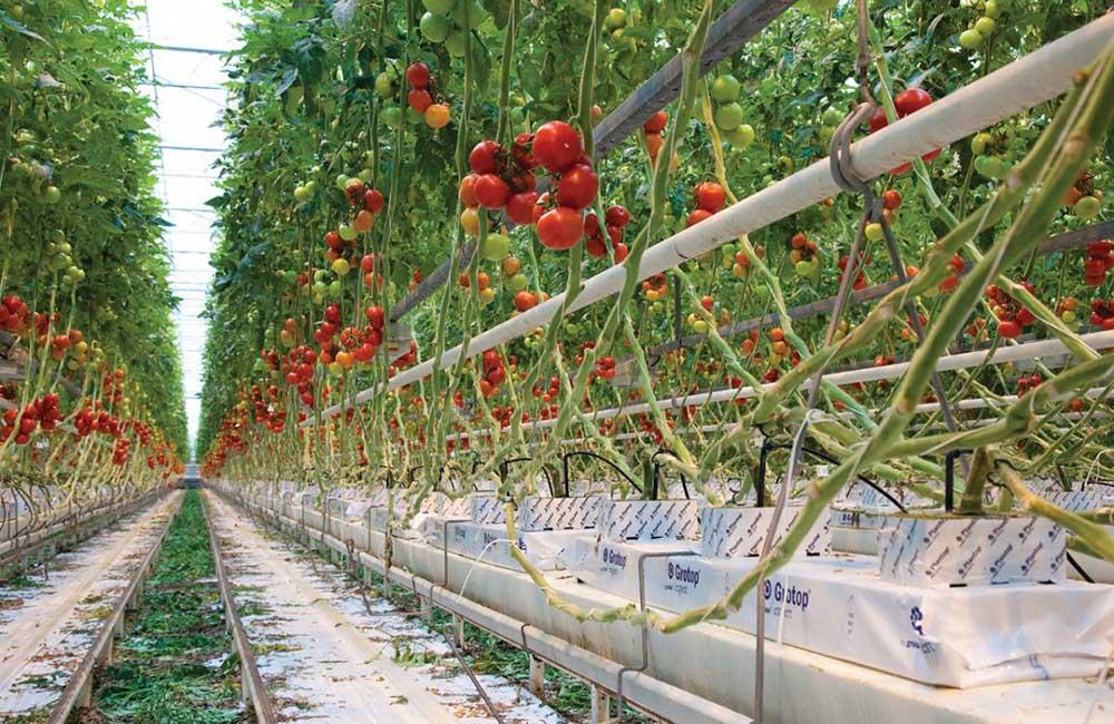 Países Bajos: número uno en la industria alimentaria por su sostenibilidad