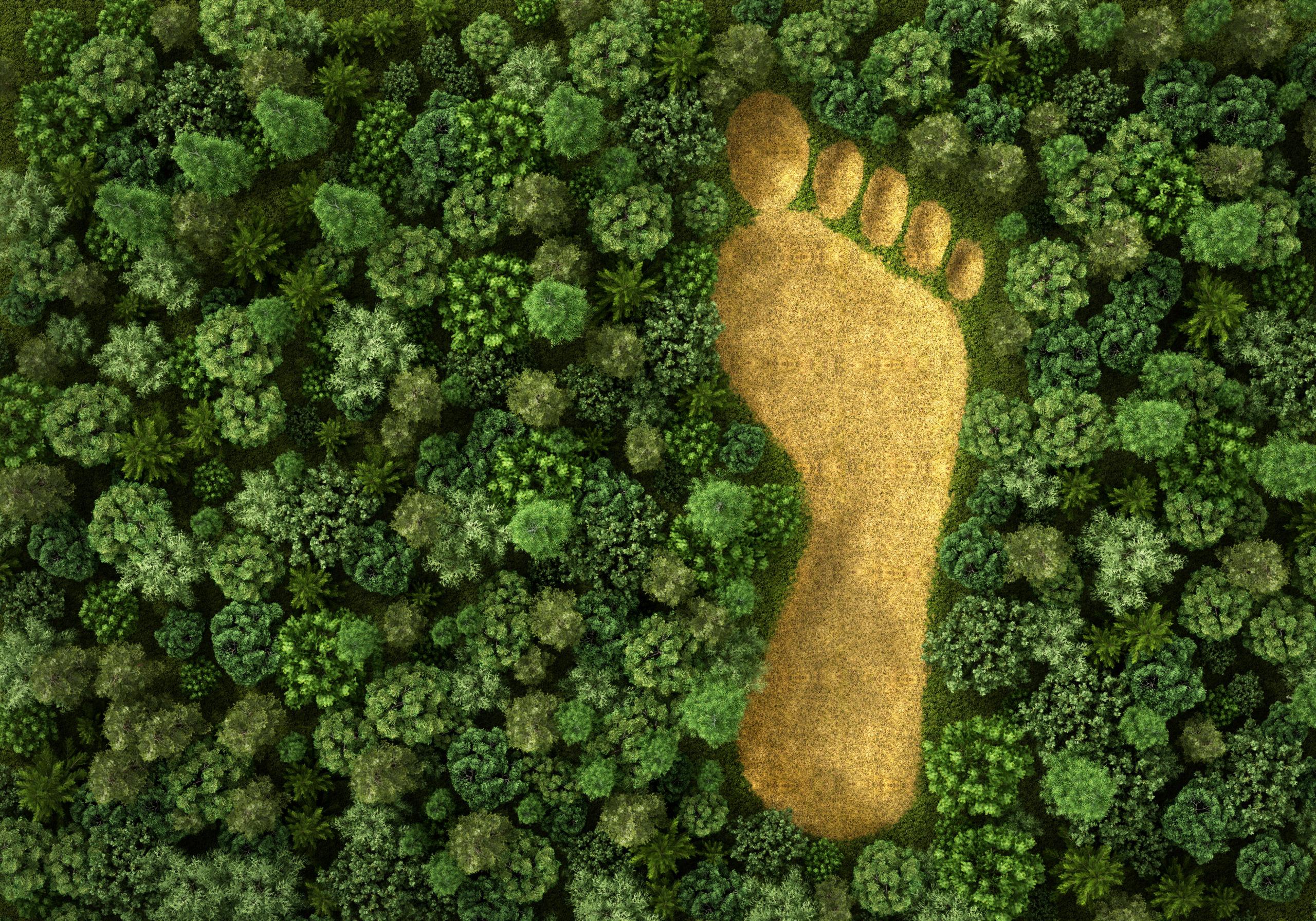 ¿Cómo impactó el 2020 a la naturaleza? Este informe lo revela