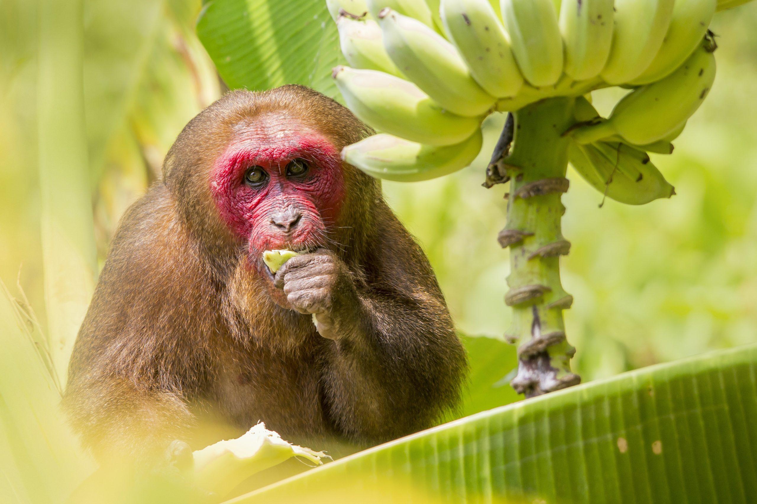 ¿Por qué el mono es tan indispensable para el ecosistema?