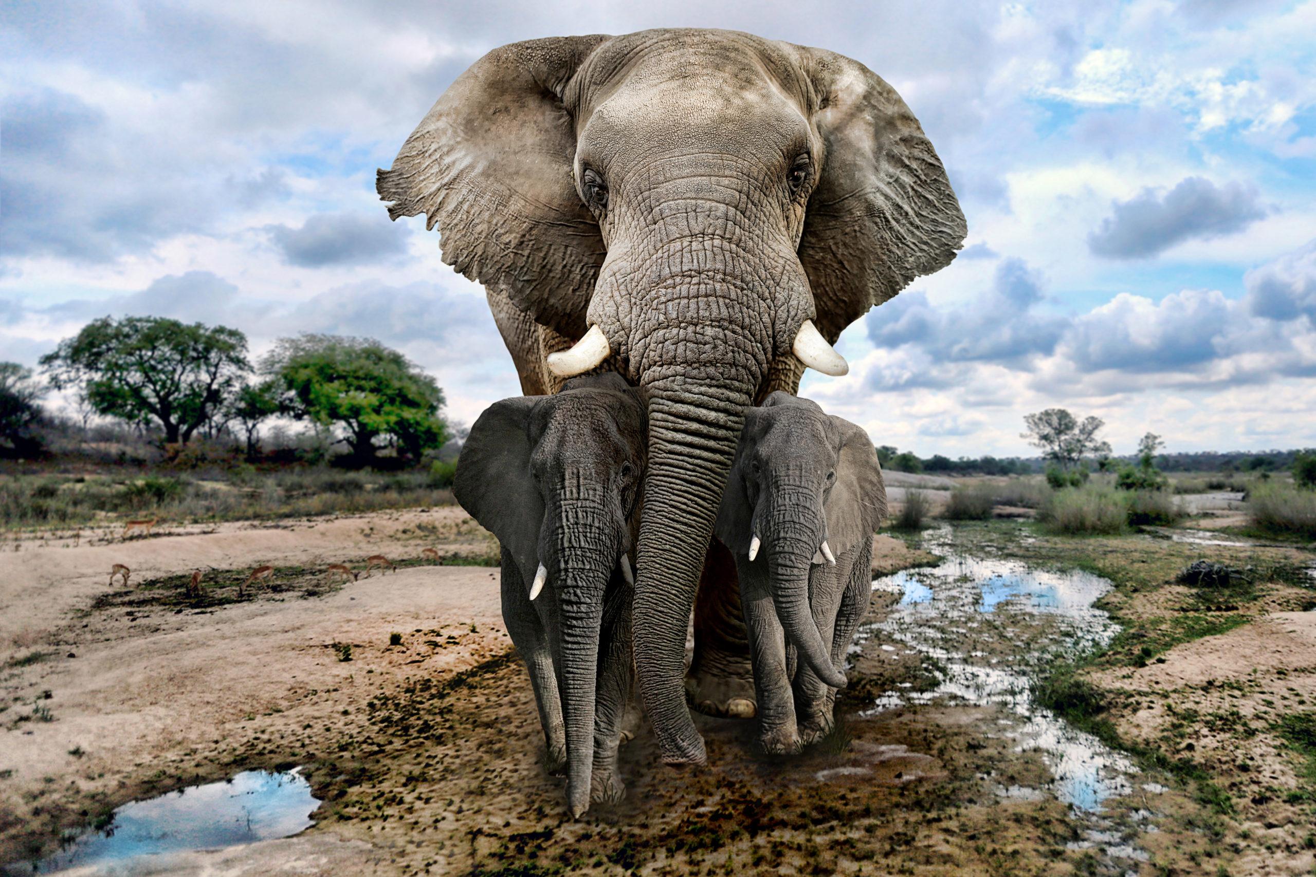 La tecnología ya permite hacer censos de elefantes africanos desde el espacio