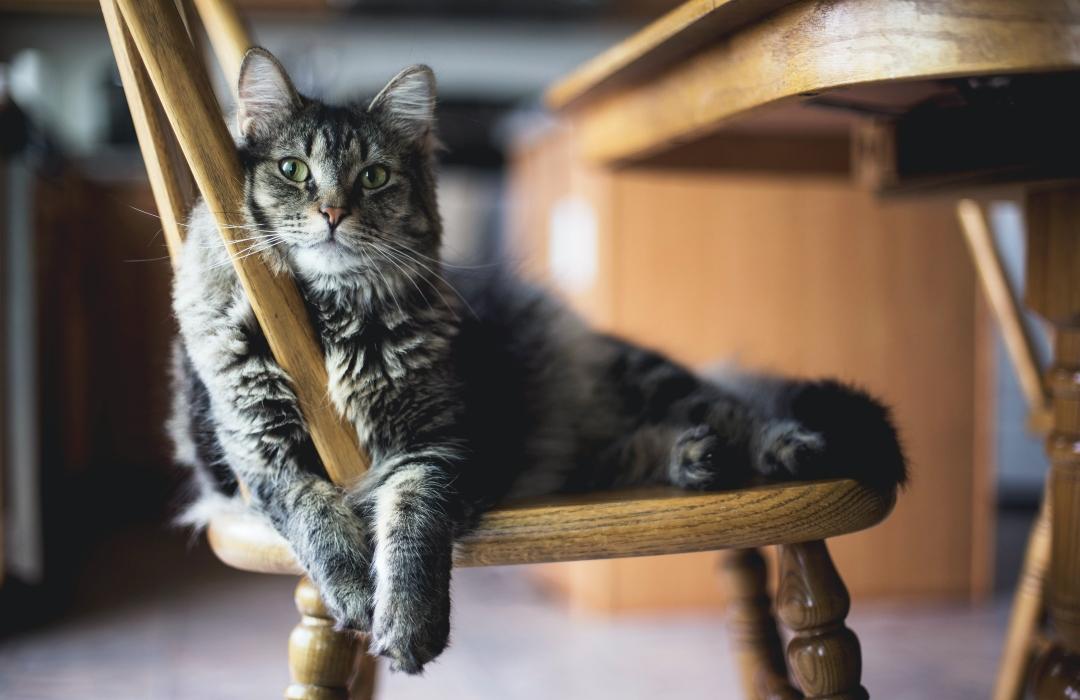 Los gatos, la mejor mascota para niños con autismo