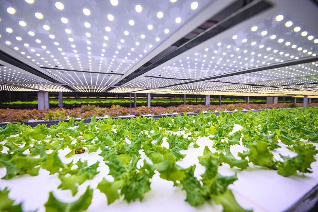 Este granja vertical en Copenhague es el futuro para lograr alimentos sostenibles