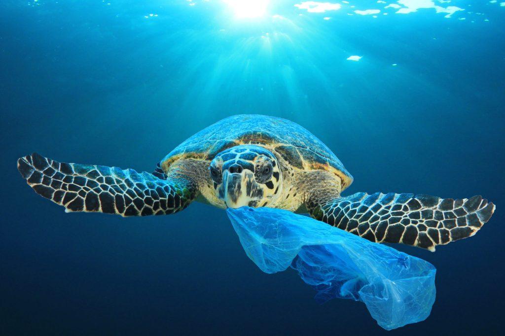 Objetos más letales para los animales marinos, ¡evítalos!