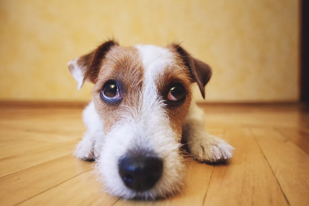 Cómo ayudar a tu mascota a superar la ansiedad de separación