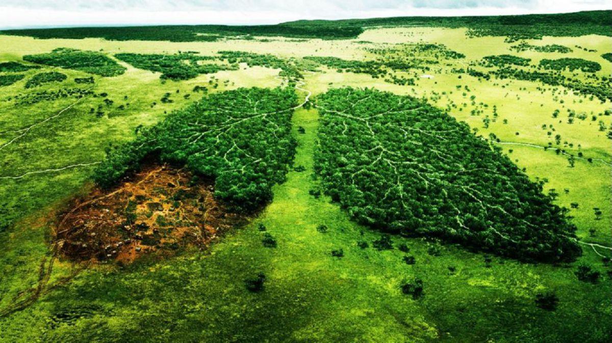 Iniciativas del G20 para evitar la degradación del suelo y proteger al medio ambiente