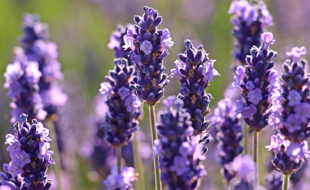 planta para aliviar dolores gracias a las plantas medicinales