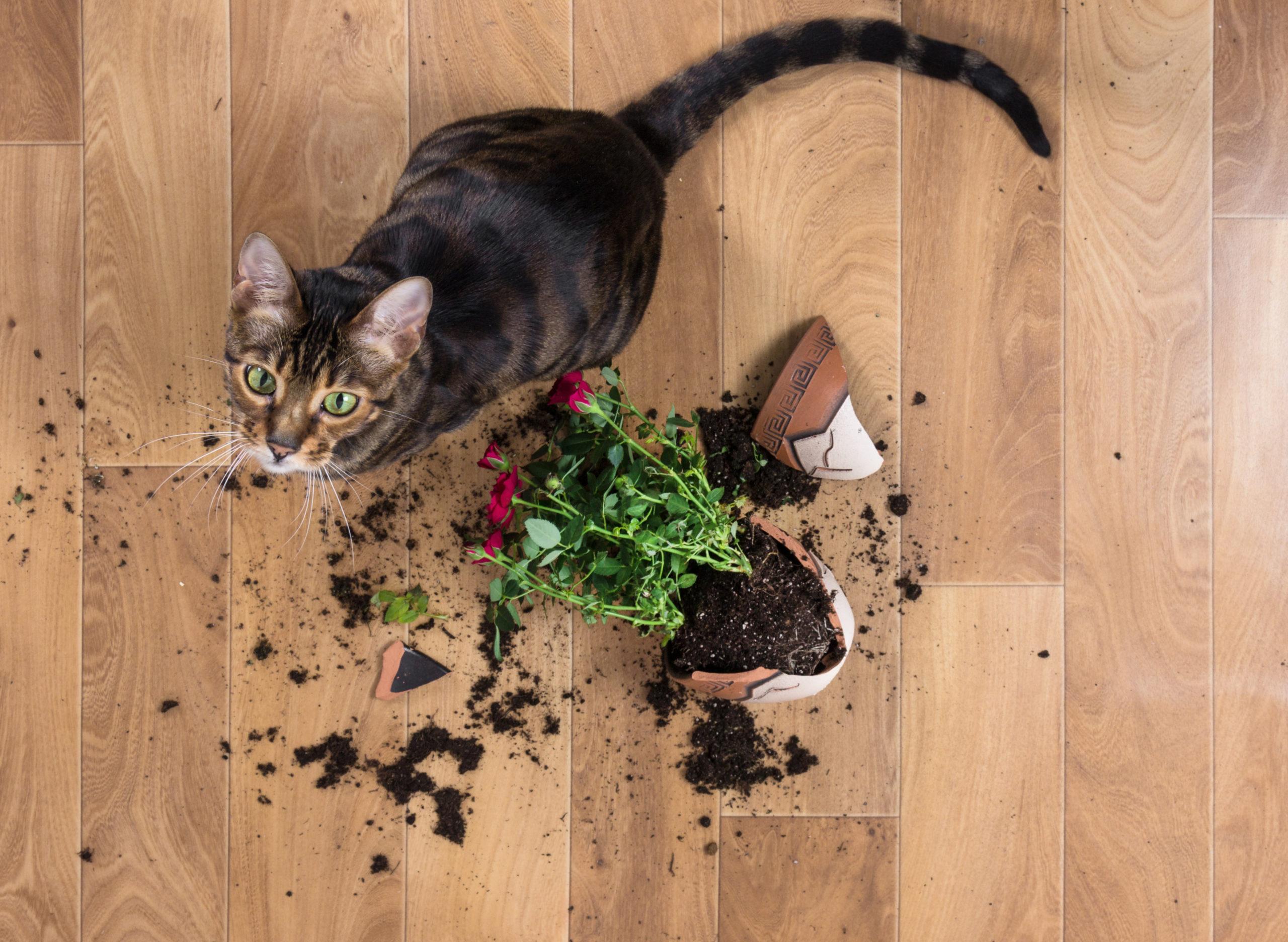 Plantas pet-friendly que puedes tener en casa