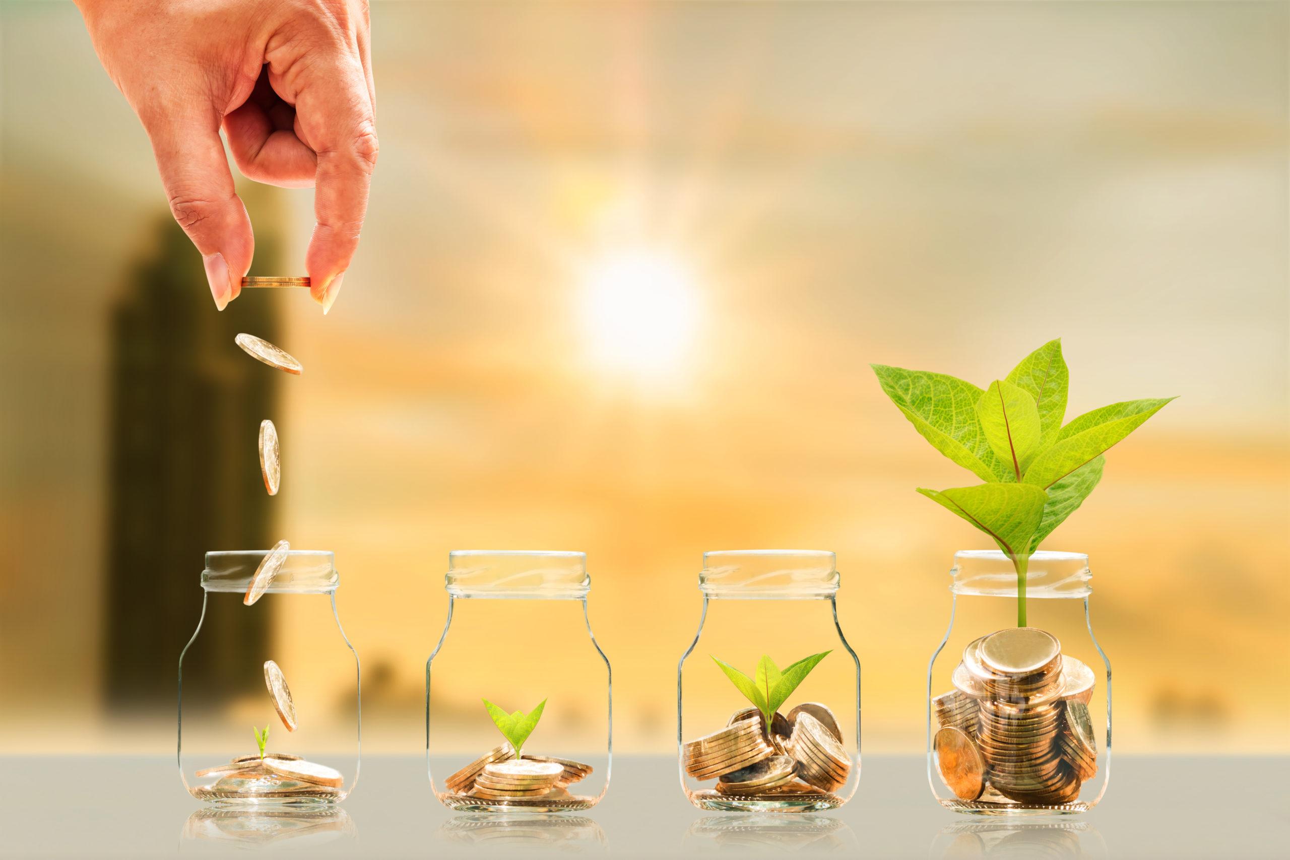 5 plantas para atraer la abundancia y buena suerte en el hogar