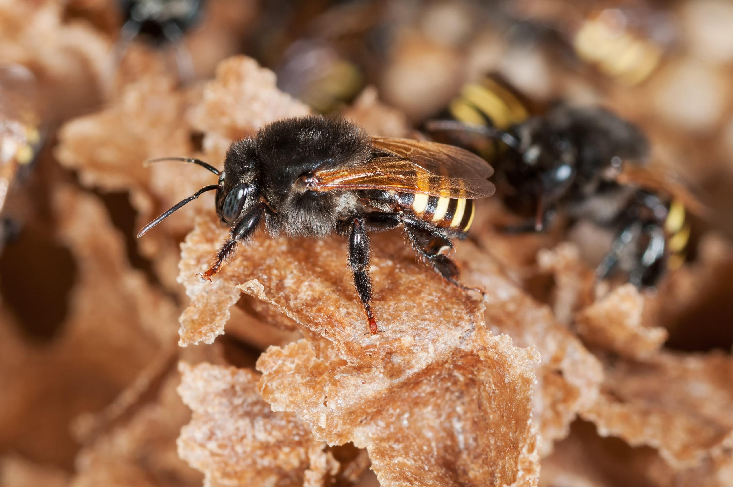 Este hotel en México trata de salvar las abejas meliponas, una especie en peligro de extinción
