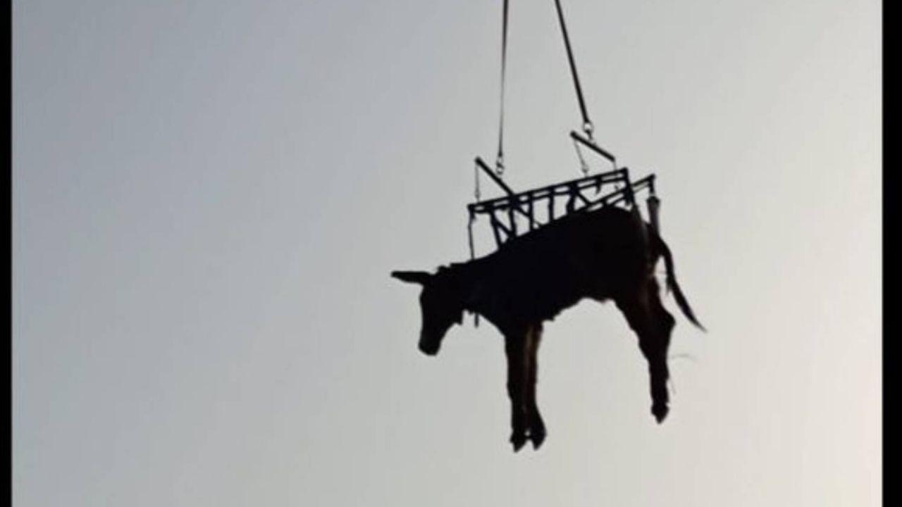 Espectacular rescate de la burra 'Olivia' en la comunidad de Madrid