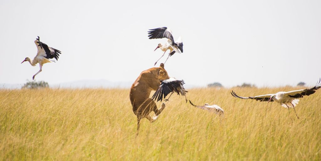«Wild Covid, pandemia salvaje», el documental testigo de la vida animal sin humanos