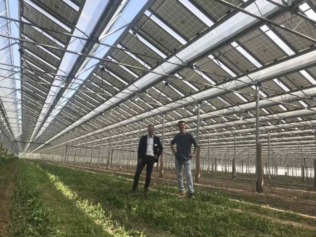 Este invernadero solar recolecta 4 toneladas de espárragos por hectárea