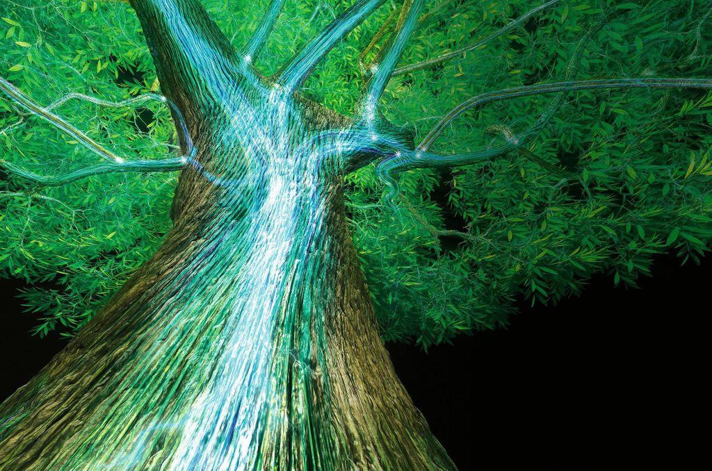 Conoce el árbol que 'sangra' níquel para defenderse de las plagas, ¡wow!