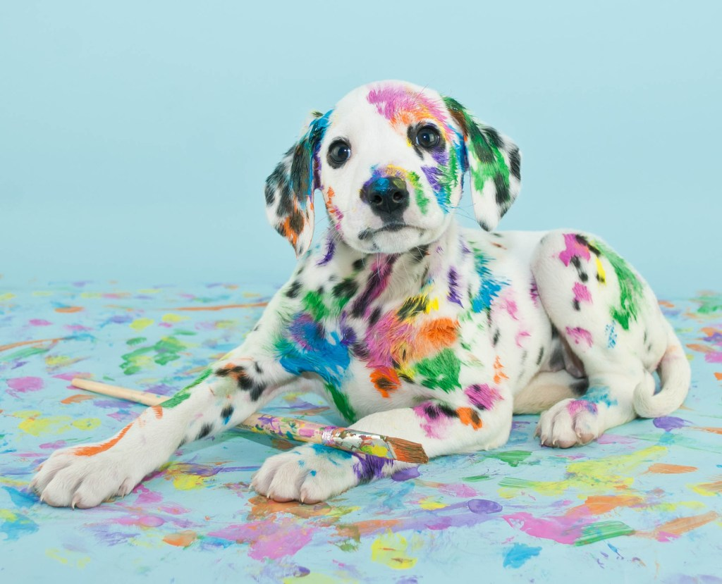 Prohibirán tatuajes y piercings en mascotas, quien lo haga pagará una multa