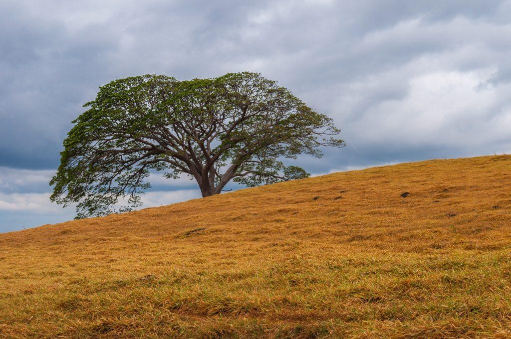 Opinión: Lecciones de un árbol Huanacaxtle y el desarrollo sostenible