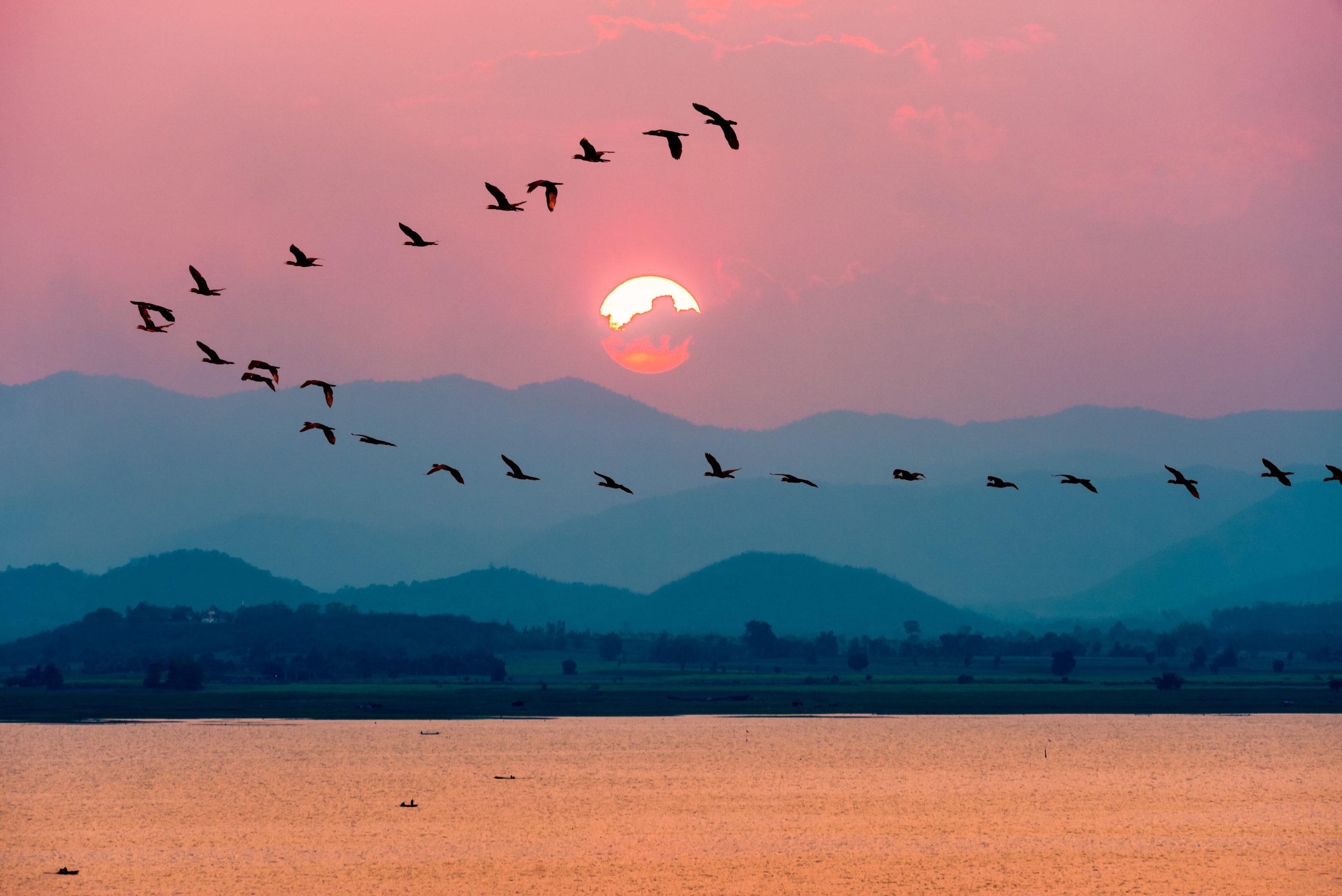 ¿Por qué son tan importantes las aves migratorias para el planeta?