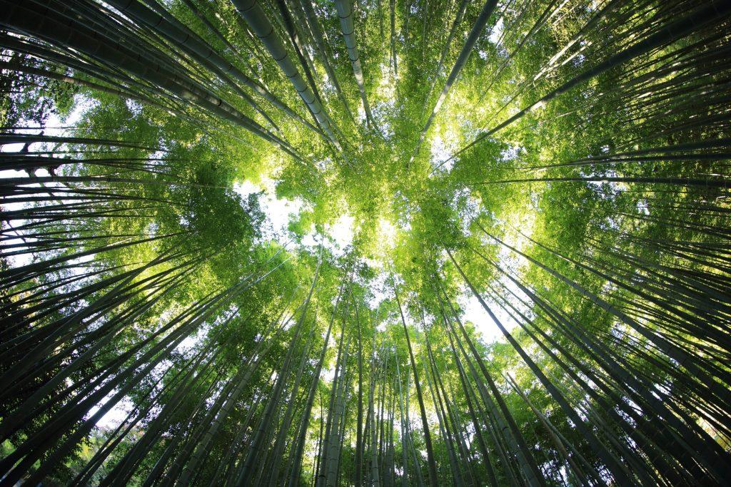 Antiguo campo de cultivo ahora es un bosque gracias a la reforestación natural