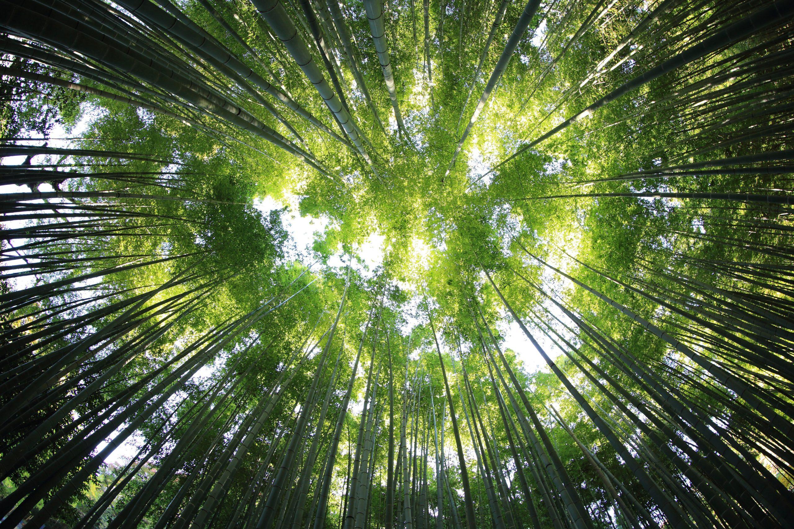 Gracias a la reforestación, ¡el planeta tiene un nuevo bosque del tamaño de Francia!