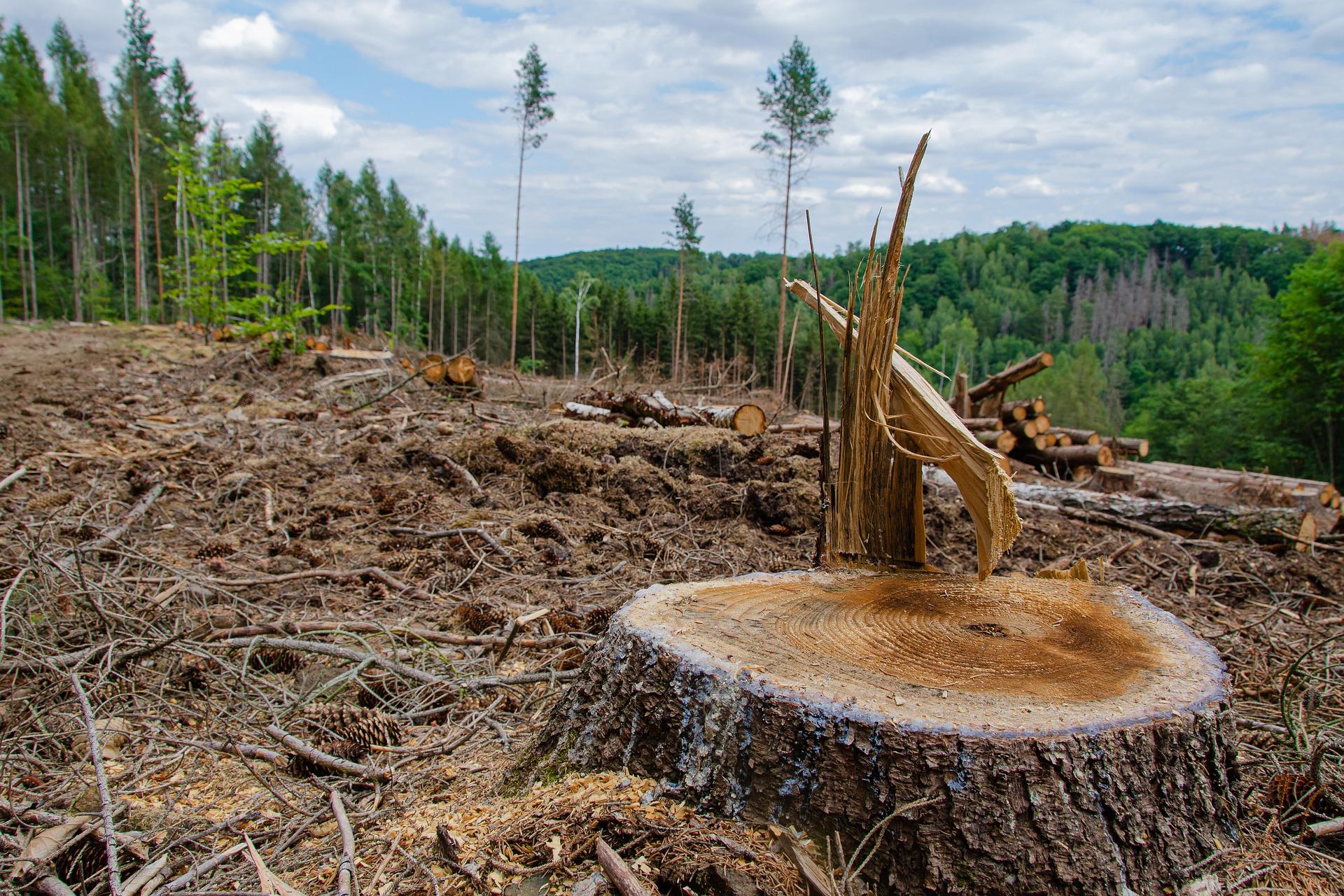 Estudio: Conservar el medio ambiente reduce la violencia en la sociedad