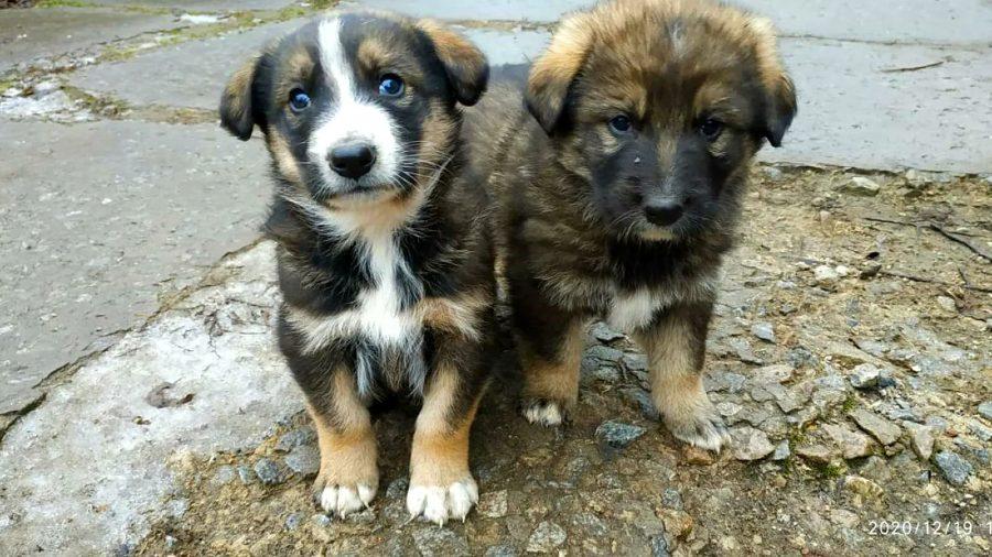 Los perros abandonados de Chernobyl ahora reciben amor de los guardias <3
