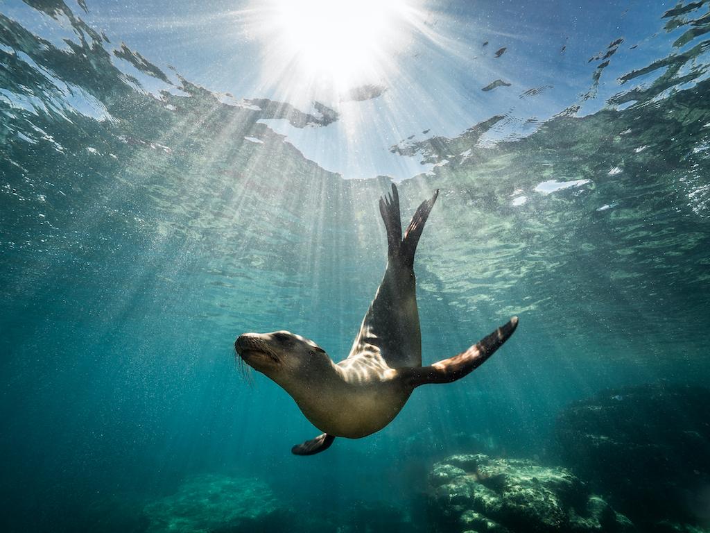 5 organizaciones mundiales que están rescatando a los océanos