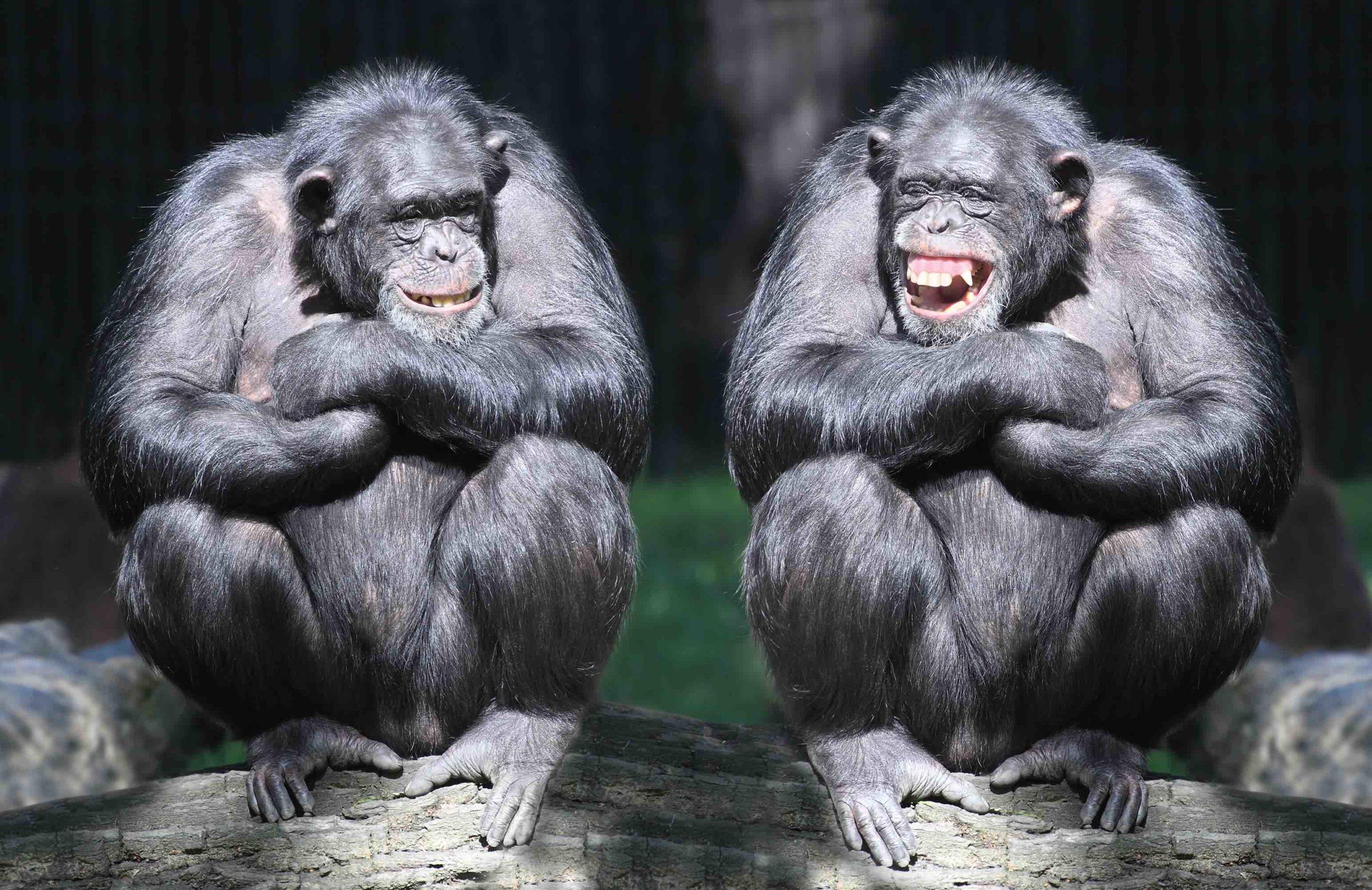 Esta ley en Reino Unido reconoce que los animales tienen sentimientos <3