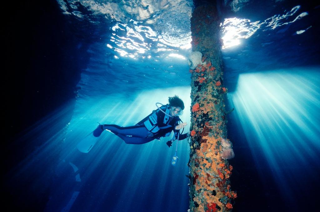 Mission Blue: la iniciativa que busca perpetuar (y proteger) la vida de los océanos