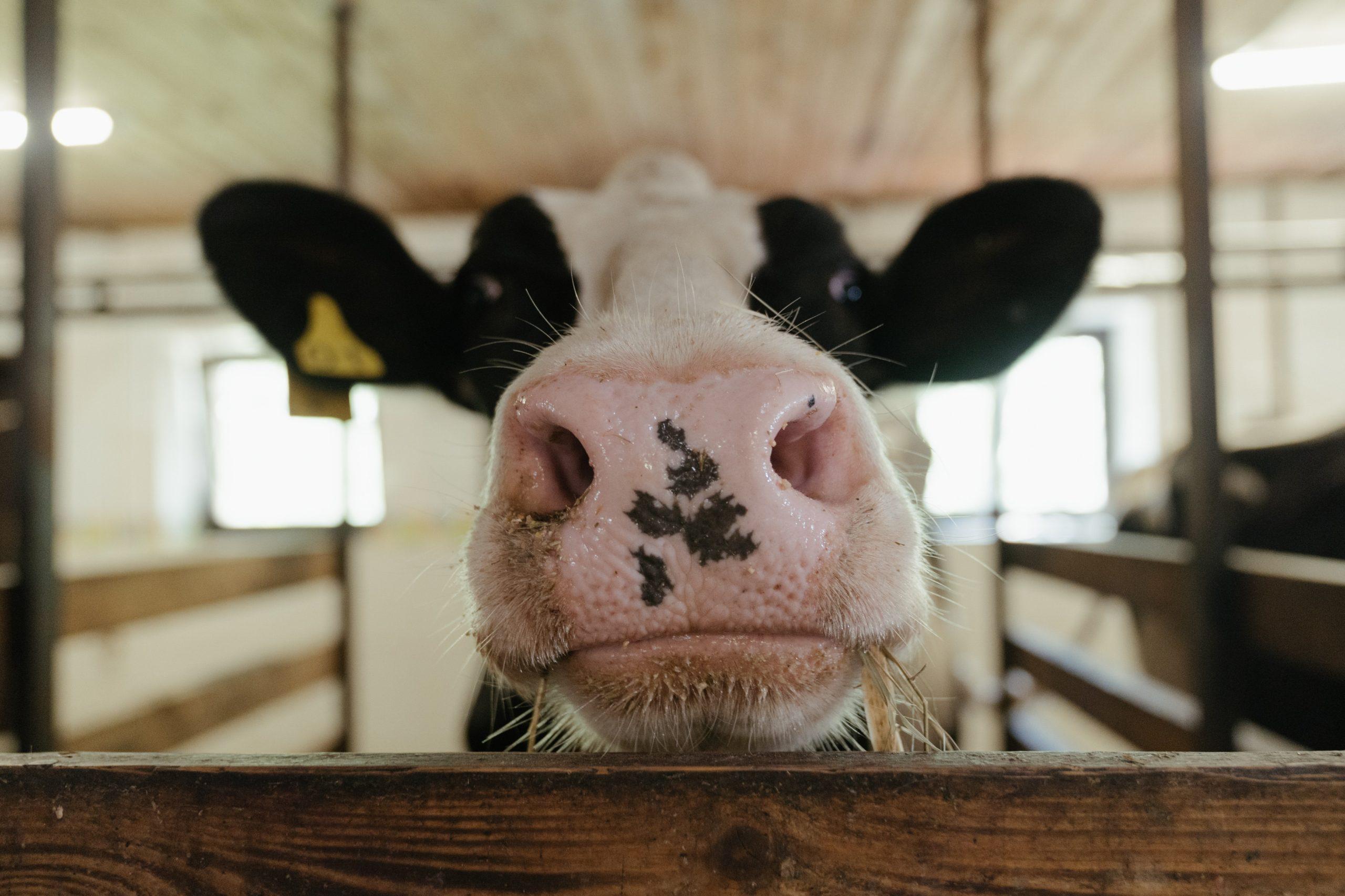 Brasil y su terrible manera de producir carne para consumo humano