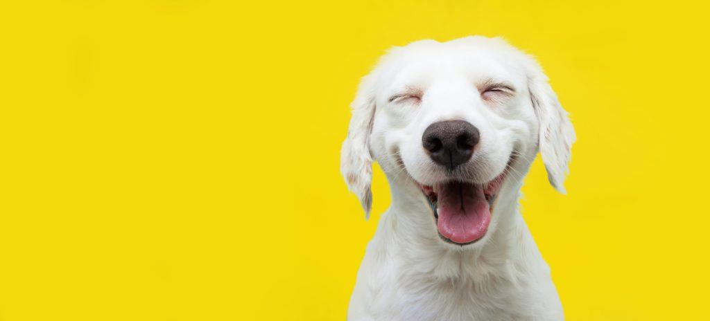 #YellowDay: 20 consejos para ser más feliz hoy (y siempre)