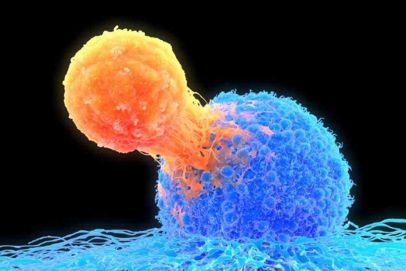 podrían desarrollar vacuna contra el cáncer en humanos