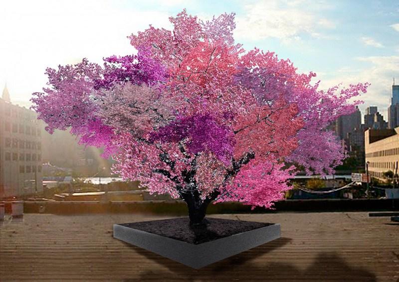 ¡Alucinante! Este árbol produce 40 tipos de frutas