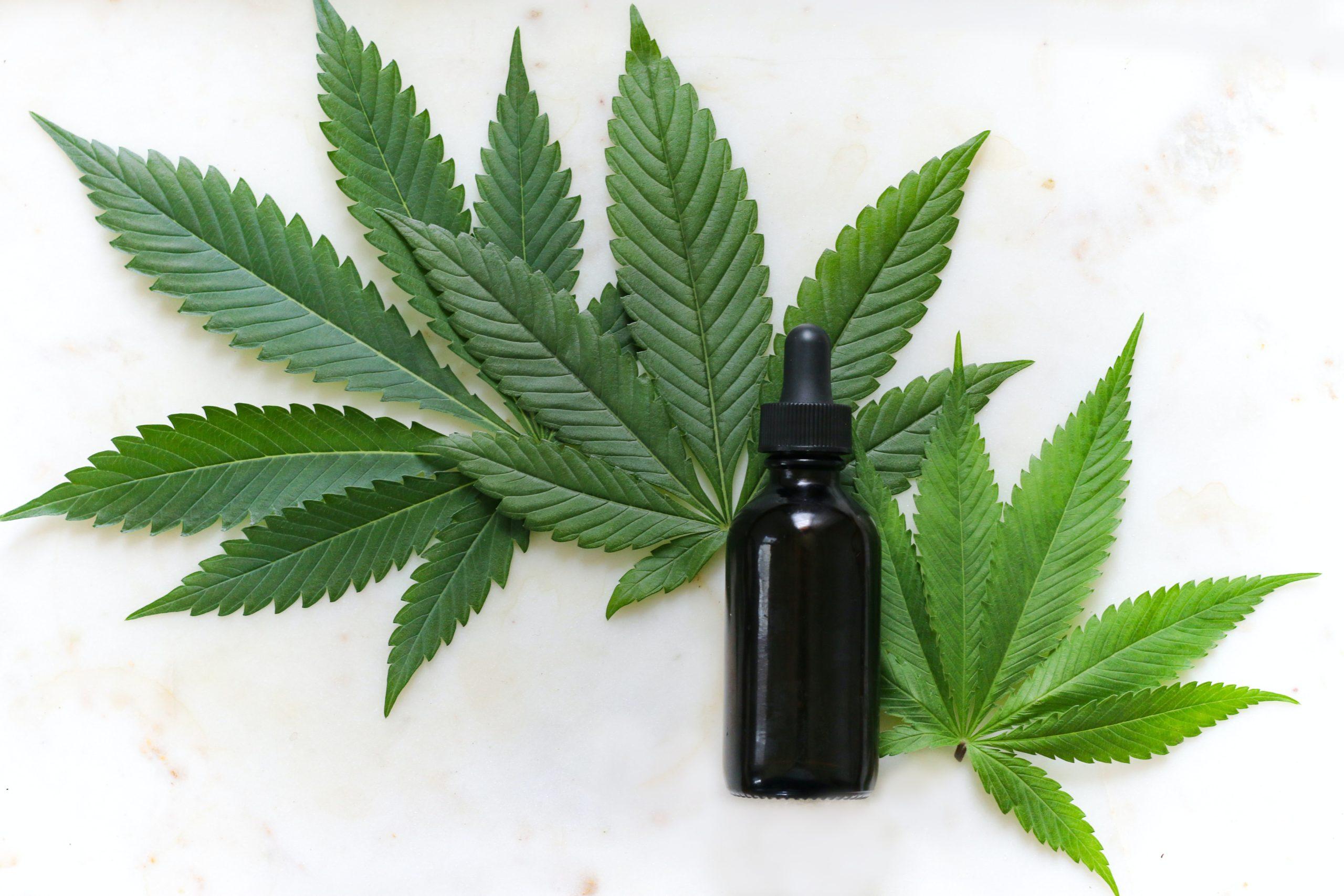 Este libro nos dice por qué el cannabis es el negocio del futuro