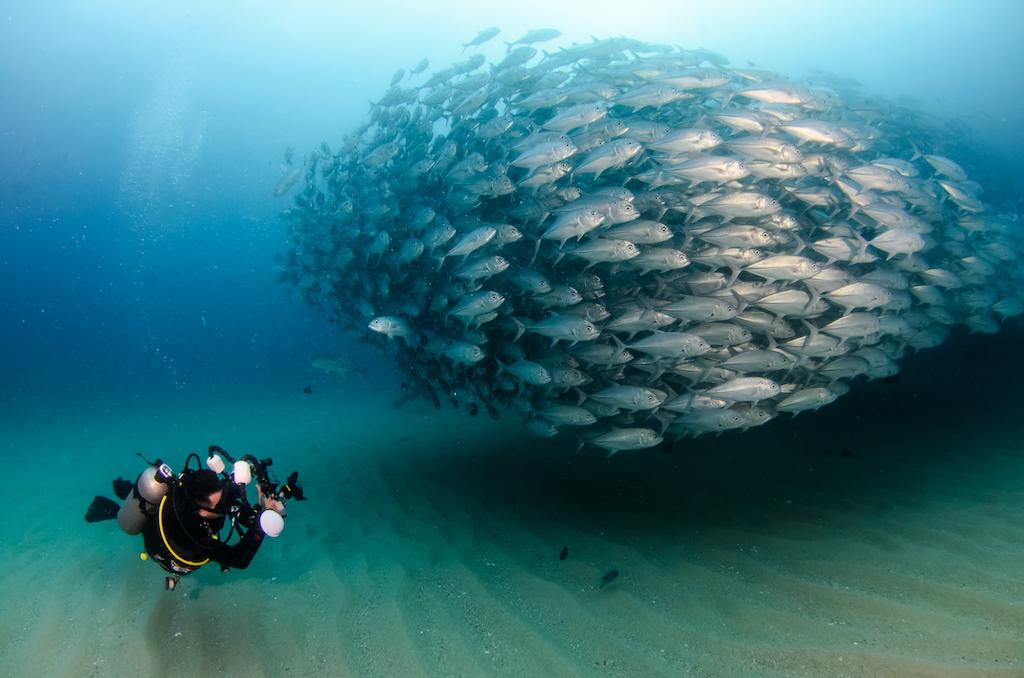 Cabo Pulmo: así ha sido su exitosa labor de recuperación ecológica