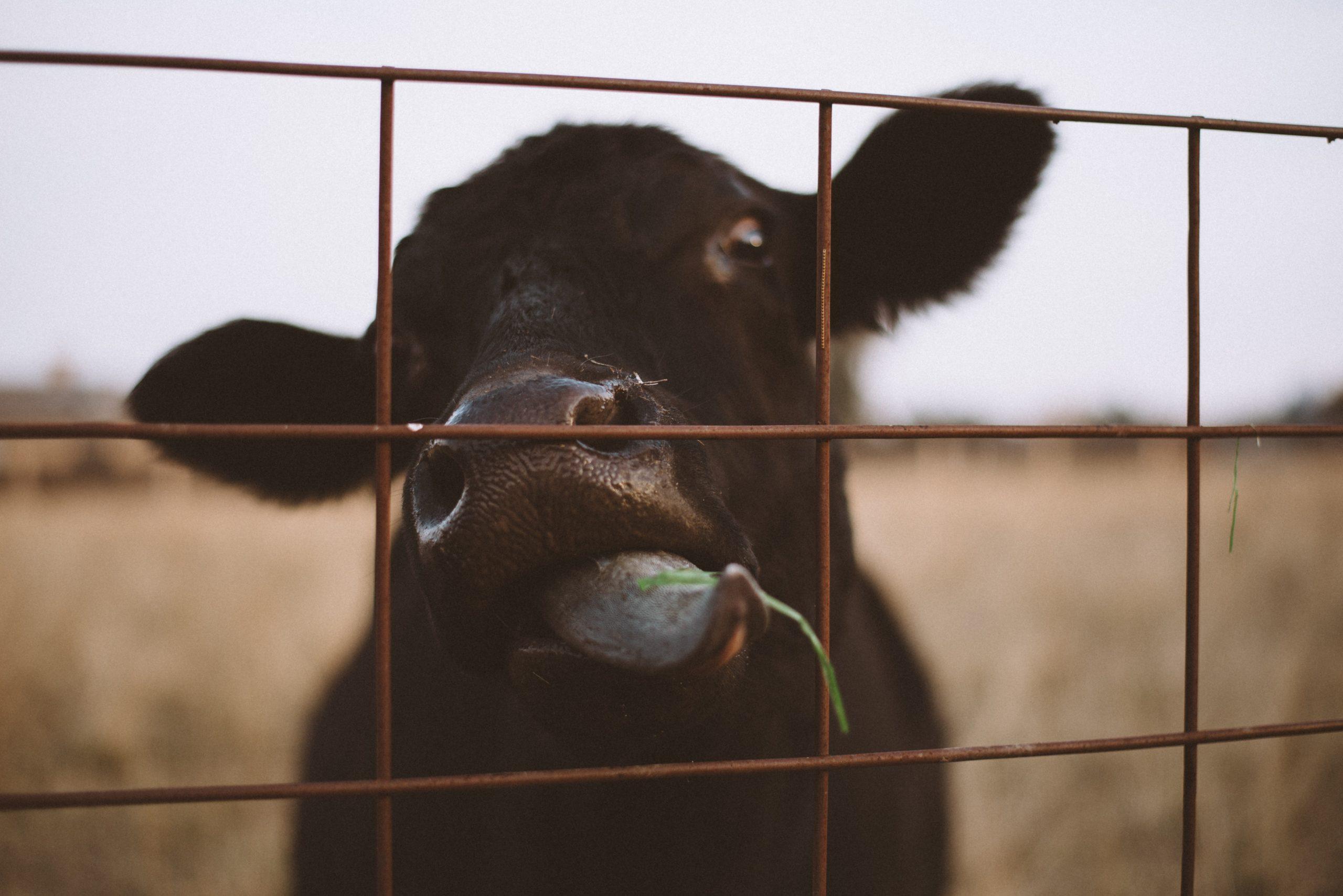 ¡Animales a salvo! Jalisco aprueba dictamen de ley para protegerlos