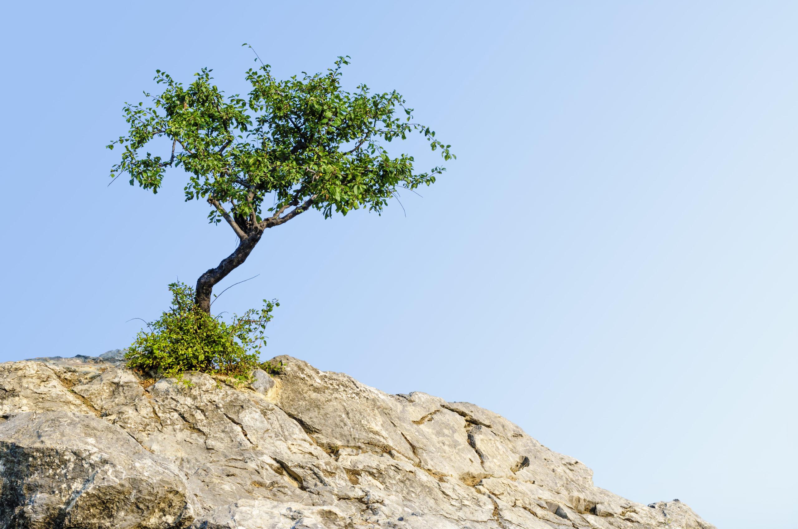Opinión: ¿Qué necesita un árbol para sobrevivir?