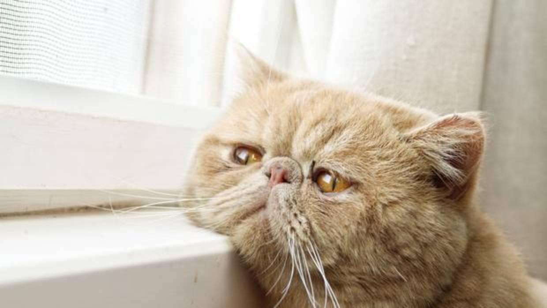 ¿Es posible que los gatos puedan sufrir anorexia? La respuesta es…