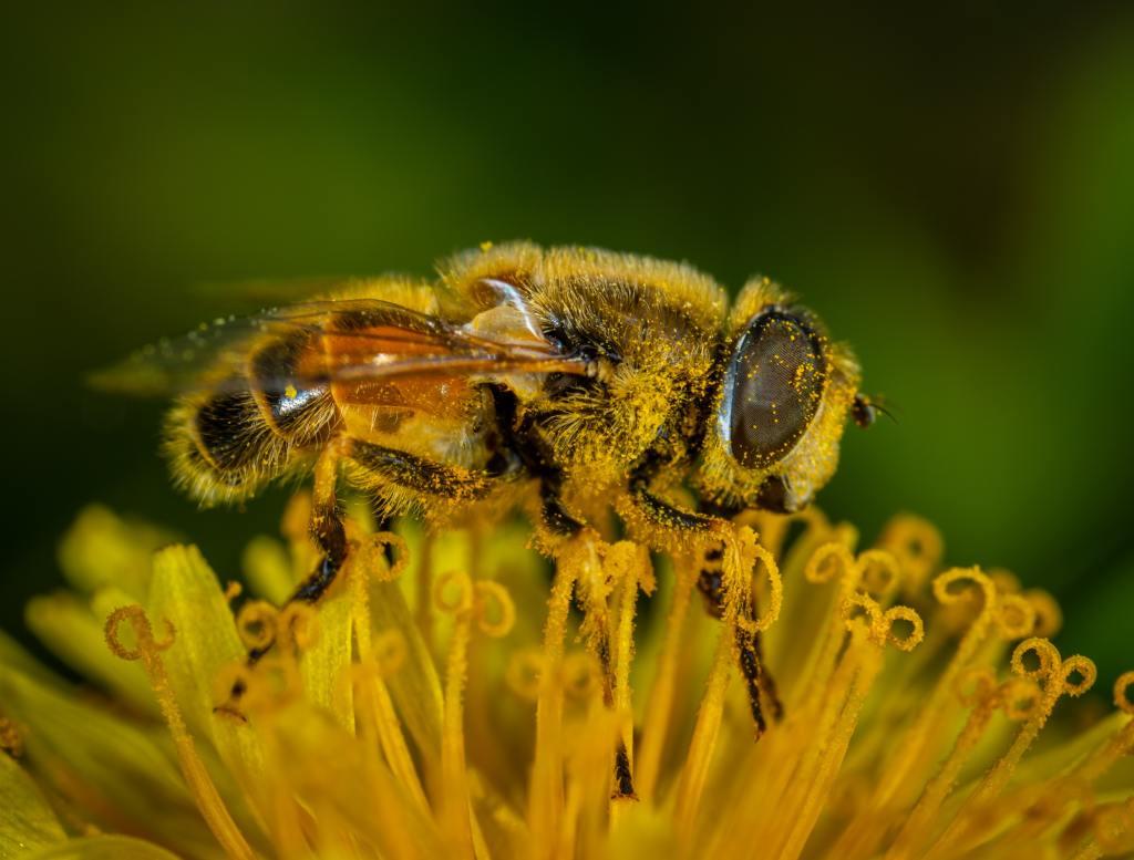 combatir alergias