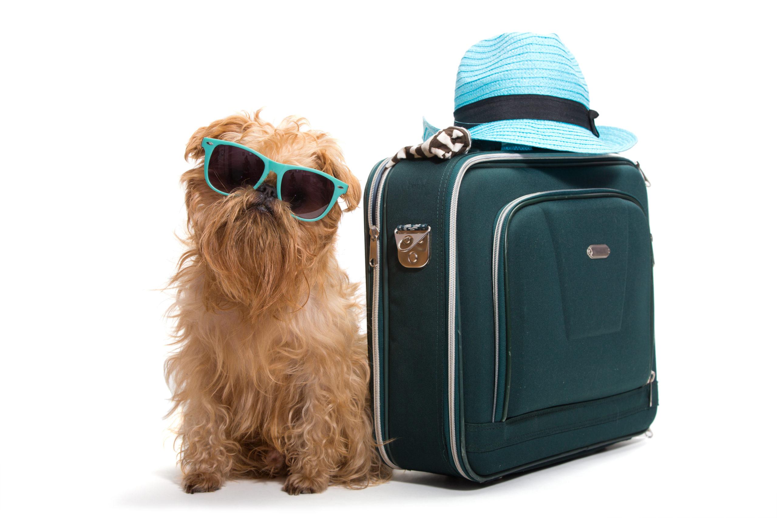 Tips para que tus mascotas pueden viajar seguras en avión