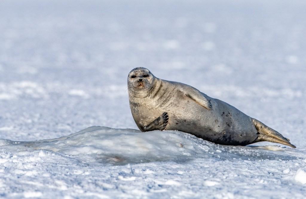 Noruega cierra su última mina de carbón en el Ártico: la transforma en un parque nacional