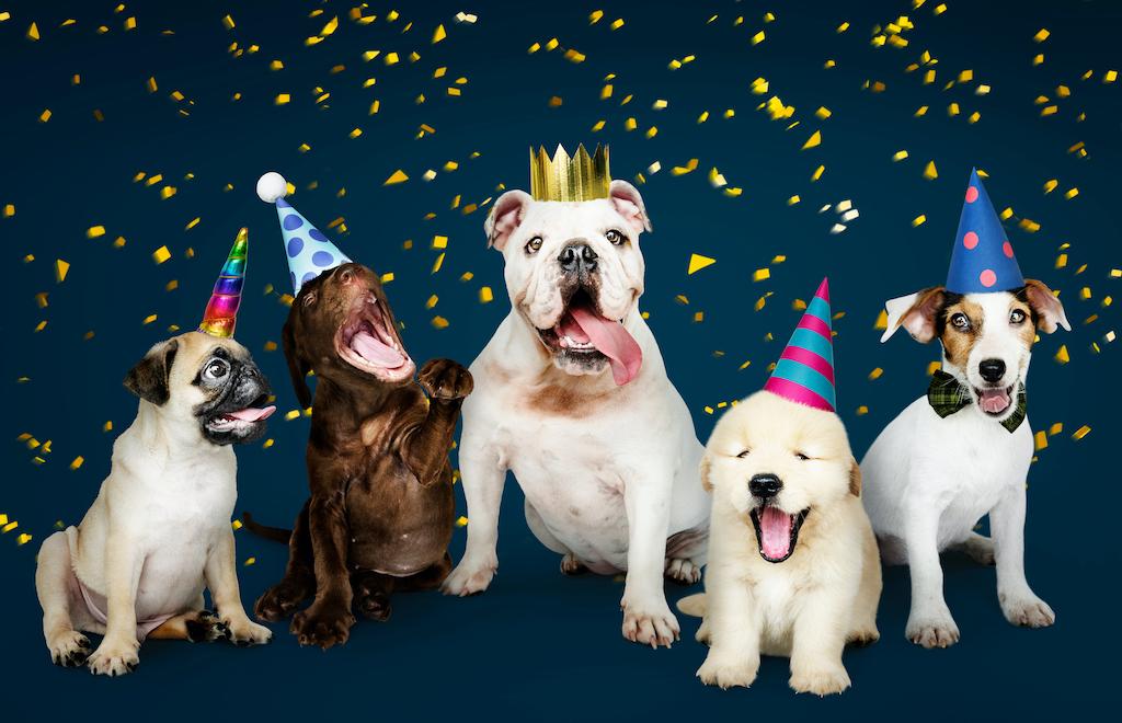 Todos los días son el Día Mundial del Perro ¡o no lo son!