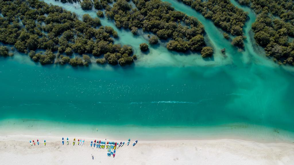 8 razones por las que debemos proteger el ecosistema manglar, ¡hoy y siempre!
