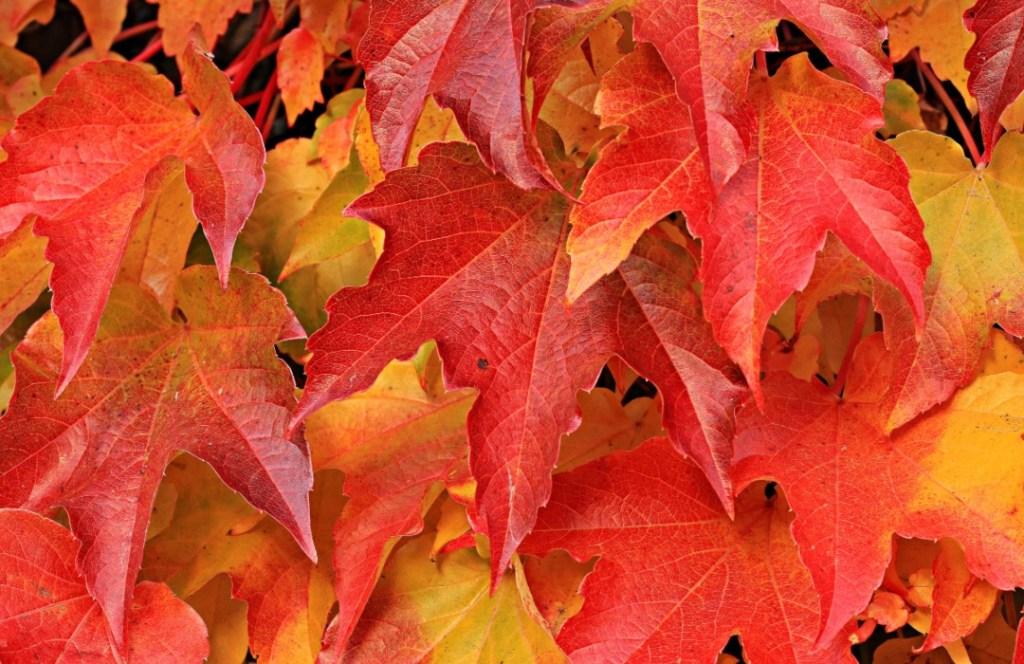 Recibe el equinoccio de otoño con este ritual y atrae la energía positiva