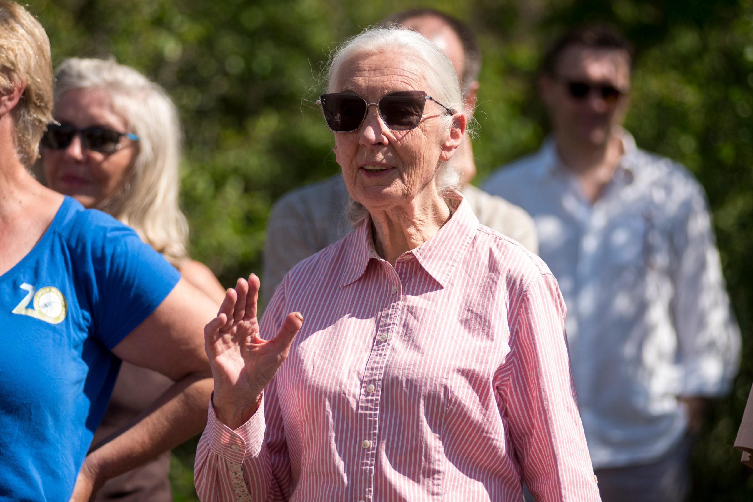 Jane Goodall impulsa movimiento para plantar ¡un billón de árboles!