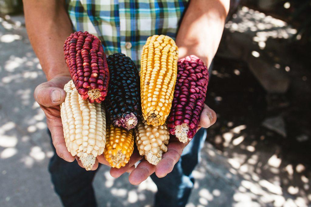 Estas increíbles iniciativas luchan por rescatar el maíz mexicano