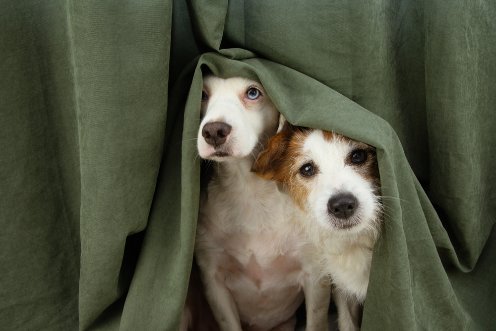 Perros con ansiedad vs. humanos ansiosos: ¿quién contagia a quién?