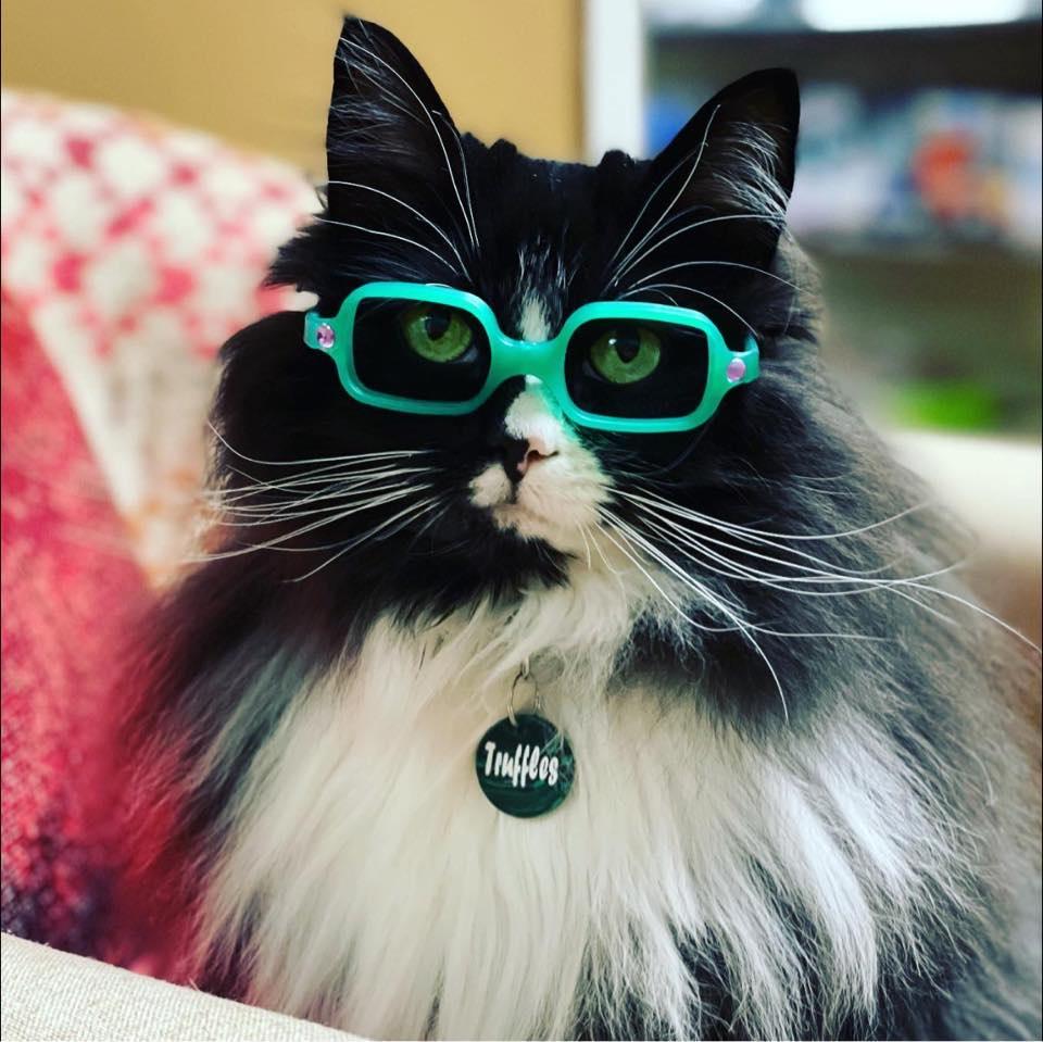 Truffles: la gatita que usa lentes para incentivar a los niños a usar los suyos