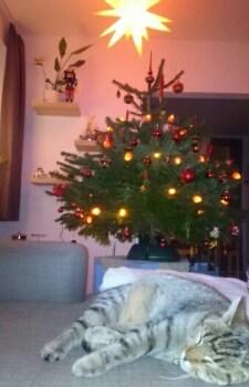 Zu Weihnachten darf's auch mal ein Katzenfoto sein…