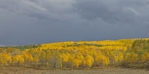 Aspen landscape