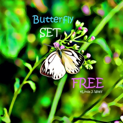 image of free verse poem butterfly set free