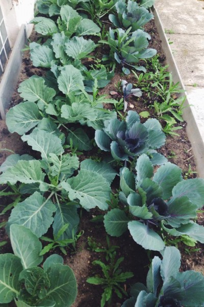 Amy Bullock Loving Garden